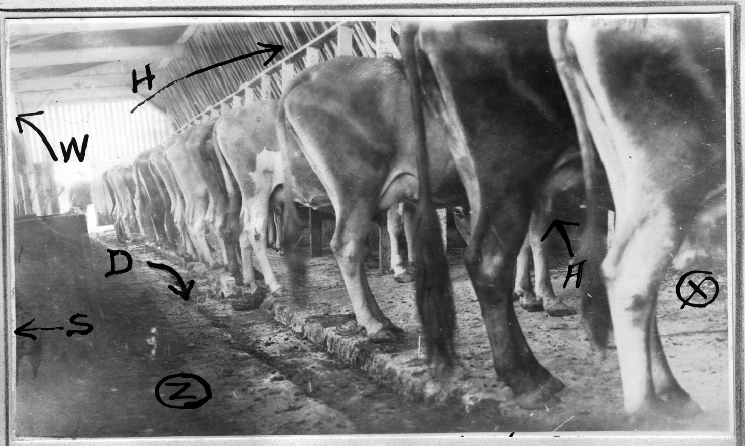 159~C. W. Stewart and Son Barn During Milking.jpg